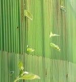 место металла зеленого цвета загородки рекламы пустое узкий dept focuc поля стоковое фото rf