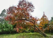 Место осени падение выходит валы Стоковая Фотография