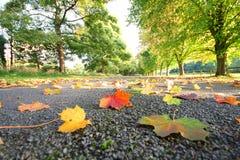 Место падения лист Стоковое Фото