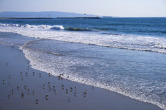 Место пляжа с Seabirds Стоковое Изображение