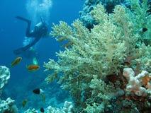 место под водой Стоковое Фото