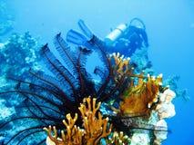 место под водой Стоковые Фотографии RF