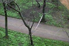 Место преступления в парке города Стоковое Изображение RF