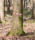 Место преступления в древесинах Стоковое Изображение RF