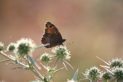 Место природы бабочки Стоковое фото RF