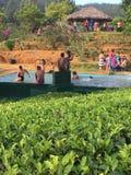 Место природы в Шри-Ланка стоковая фотография rf