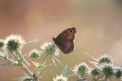 Место природы утра бабочки Стоковые Изображения RF