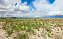 Место пустыни безжизненное Стоковые Фото