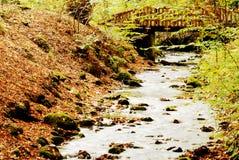 место реки осени Стоковые Фото