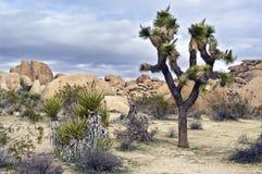 место югозападные США пустыни Стоковые Изображения RF
