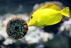 место 3 аквариумов Стоковое Фото