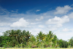 место jawa Индонесии сельское Стоковая Фотография