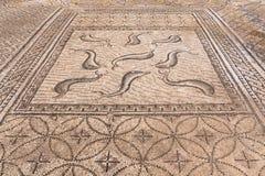 Место Volubilis в Марокко стоковые изображения rf