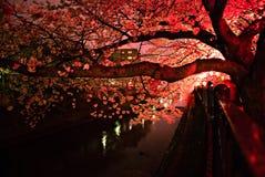 Месяц вишневых цветов на Японии стоковые изображения rf