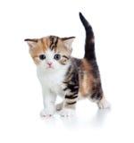 месяц старое одно кота младенца унылое Стоковые Изображения