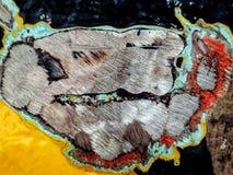 Металл и старый отрезок краски стоковые изображения