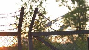 Металл колючей проволоки обнесет забором выравниваясь золотой заход солнца часа - знак клетки опасности и никакой свободы сток-видео