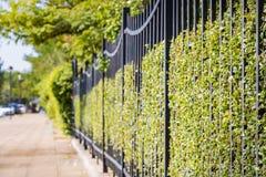Металл обнесет забором зеленую траву стоковые фотографии rf