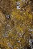 Металл покрытый с мхом, лишайником Стоковая Фотография RF