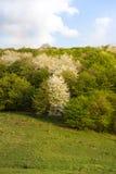 Метаморфоза в природе, весне от белизны к теням зеленого цвета Стоковые Изображения RF