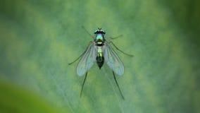 Металлическая муха Стоковые Фото