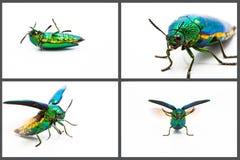 Металлический комплект жука деревянной расточкой Стоковое фото RF