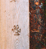 Метка собаки Стоковые Изображения RF