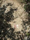 Метка тропы Стоковое Изображение