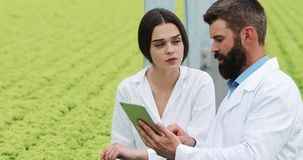 Метод гидропоники расти салат в парнике 2 ассистента лаборатории рассматривают зелёный расти завода аграрным акции видеоматериалы
