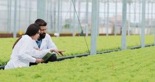 Метод гидропоники расти салат в парнике 2 ассистента лаборатории рассматривают зелёный расти завода аграрным видеоматериал