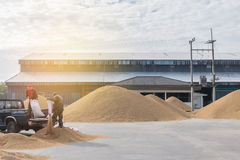 Метод запачканного и мягкого фокуса абстрактной нежности сухой коричневого падиа Стоковое Фото