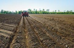 Механически делающ гребни и засующ картошки Стоковые Фото