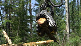 Механически рука режет свеже прерванный ствол дерева в лесе сток-видео