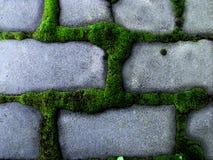 Меховой зеленый мох вырос вокруг кирпичей Стоковые Фотографии RF