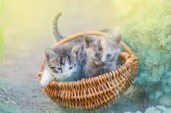 Меховой котенок в плетеной корзине в саде Стоковые Изображения