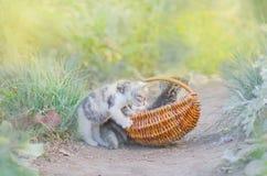 Меховой котенок в плетеной корзине в саде Стоковое Фото
