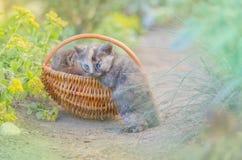 Меховой котенок в плетеной корзине в саде Стоковая Фотография RF