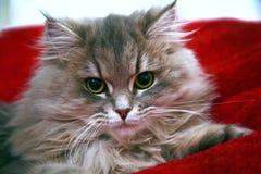 Меховой котенок Стоковое Изображение RF