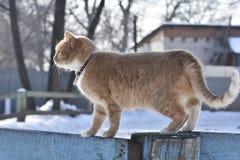 Меховые прогулки кота загородка стоковое фото