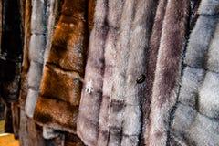 Меховые шыбы на вешалках Магазин меха меховые шыбы в ряд стоковые изображения