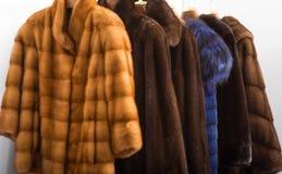 Меховые шыбы Стоковая Фотография RF