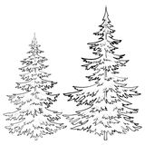 Мех-дерево, контуры Стоковое Фото