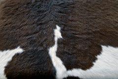 Мех коровы Стоковые Фото