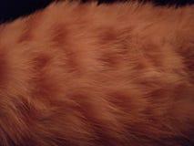 Мех кота имбиря стоковые фото