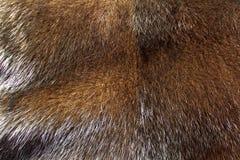 Мех норки Брайна стоковое изображение rf