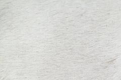 Мех собаки Стоковые Фото