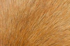 Мех собаки Стоковое Изображение