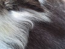 Мех текстуры или предпосылки оленей абстрактное Стоковые Фотографии RF