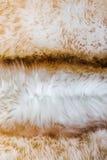 Мех текстуры овец Стоковое Изображение