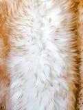 Мех текстуры овец Стоковая Фотография